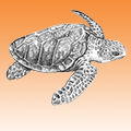 Turtle Friendly Amber LED Lighting Turtle-Friendly-LED-Lighting-orange